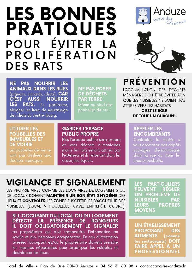 flyer lutte contre la prolifération des rats