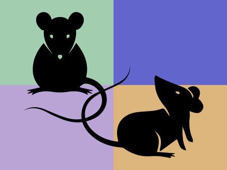 illustration rats