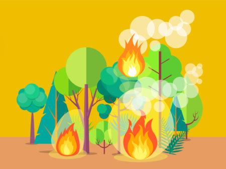 illustration feux de forêt