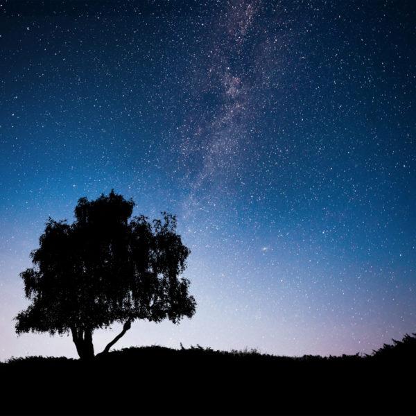 illustration ciel étoilé : https://fr.freepik.com/photos/arbre'>Arbre photo créé par standret - fr.freepik.com
